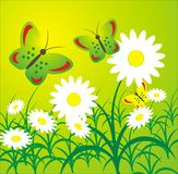 Background summer. Summer glade with camomiles and butterflies Royalty Free Stock Images