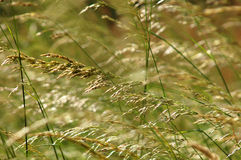 Background of summer grass Royalty Free Stock Photos