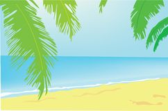 Background. Summer. A green palm tree on a beach. Royalty Free Stock Photo