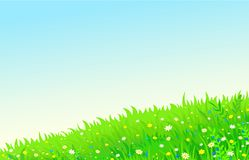 Background a summer lawn with flowers Stock Image