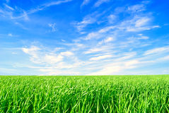Background - summer,  nature. Royalty Free Stock Photos