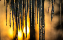 Background,  sun dawning on icicles hanging low from roof edge.  Abstract of natural icicle formation, lighted by sunrise. Stock Photo