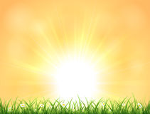 Background with Sun and grass Stock Photography
