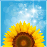 Background with sunflower Stock Image