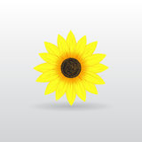 Background with sunflower. Beautiful flower background for your business vector illustration