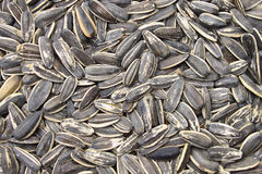 A background of sunflower grains Stock Photos
