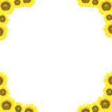 Background Sunflower. Royalty Free Stock Images