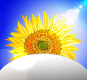 Background with sunflower over blue sky. Vector illustration Royalty Free Stock Photography