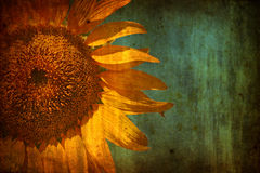 Background with Sunflower over grunge texture vector illustration