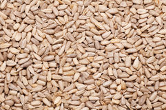 Background of sunflower seeds Stock Images