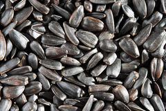 Background of sunflower seeds. Background of scattered sunflower seeds Stock Photo