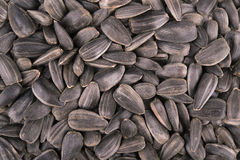 Background with sunflower seeds Stock Image