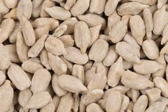 Background of sunflower seeds. Royalty Free Stock Photography