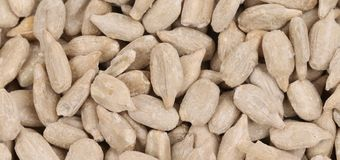 Background of sunflower seeds. Stock Photography