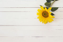Background with sunflower on a white painted wooden boards. Spac Stock Photo