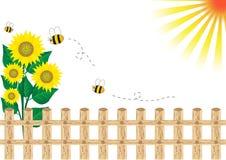 Background sunflower Royalty Free Stock Image