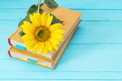 Background with sunflower and yellow book on blue wooden boards. Stock Photo