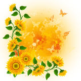Background with sunflowers Royalty Free Stock Photography