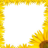 Sunflower border design Royalty Free Stock Images