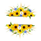 Background with sunflowers, daisies, cornflowers and ears of wheat. Vector eps-10. Royalty Free Stock Photo
