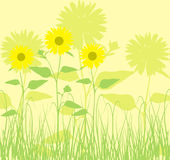 Background with sunflowers, vector Stock Photo