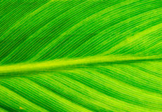 Background surface of green leaf Stock Image