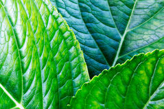 Background surface of  green leaf Royalty Free Stock Photo