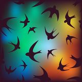 Background with swallow Royalty Free Stock Image