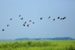 Background  swamp. In Nakhonsawan province of thailand Stock Photo