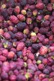 Background of sweet fresh raspberries closeup. Fruit background raspberries closeup with various red colors taken at the food market of Merida. Venezuela Royalty Free Stock Photo