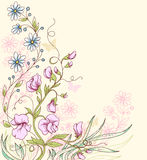 Background with sweet pea. Floral summer vector background with sweet pea Stock Photos