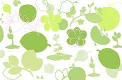 Background symbolizing summer: sprouts, flowers, fruit and leave Royalty Free Stock Photos
