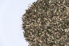 Background of the tea of dried nettle Stock Photo