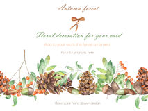 Background, template postcard, forest ornament with the watercolor forest plants (oak acorns, fir cones, rowan tree) Stock Photos