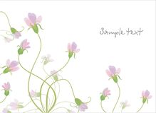 Background with tender meadow flowers. Vector drawing of the meadow flowers Royalty Free Stock Images