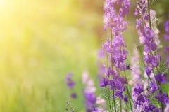 Violet flowers background Stock Images