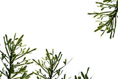 Background for text, green leaves isolated on the white. Background for text, green leaves isolated on the white Stock Images