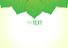 Background text leaves v3 Royalty Free Stock Image
