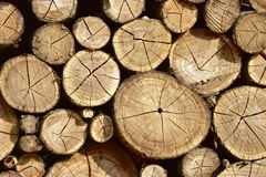 Close-up of dry wooden logs as abstract natural background. stock photo