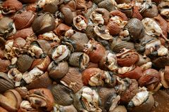 Background texture of Atlantic sea snail meat Royalty Free Stock Photography