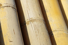Background texture of bamboo. Decorative highlighting the relief Stock Photo