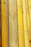 Background texture of bamboo. Decorative highlighting the relief Stock Photography
