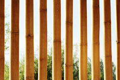 Background texture of bamboo. Decorative highlighting the relief Stock Photos