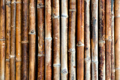 Background texture of bamboo canes Royalty Free Stock Image
