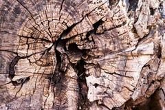 Texture of cut tree wood stock photo