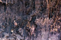 Wood texture of tree trunk and bark royalty free stock images