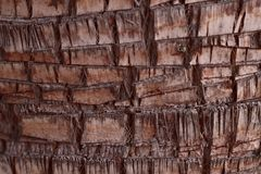 Background texture of the bark of an old brown palm tree. stock photography