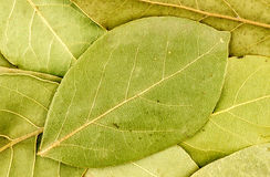 Background texture of bay leaves Stock Photos