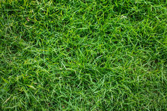 Background and texture of Beautiful artificial grass pattern. Green grass background texture, Green grass Royalty Free Stock Photos