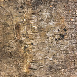 Background texture of birch bark Royalty Free Stock Photography